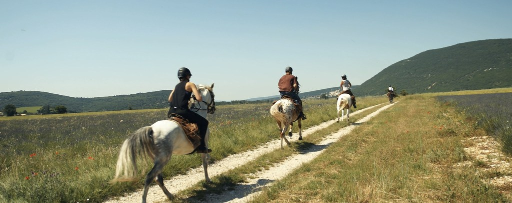 riding experience gallop behind